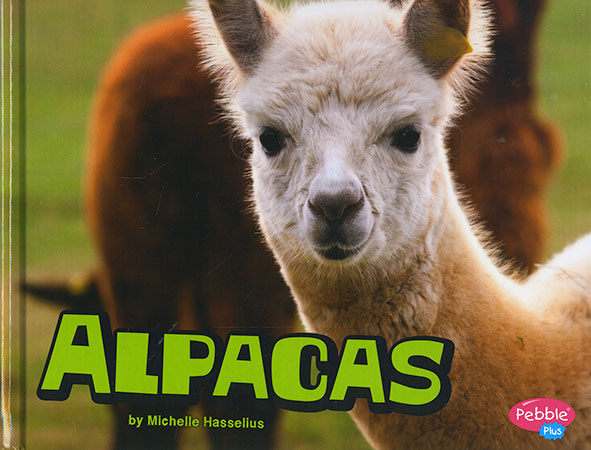 Buy Farm Animals: Alpacas from raintreeaust