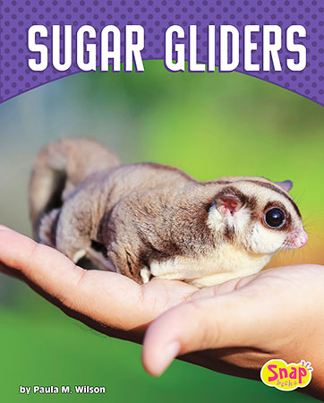 Buy Cute and Unusual Pets: Sugar Gliders from BooksDirect