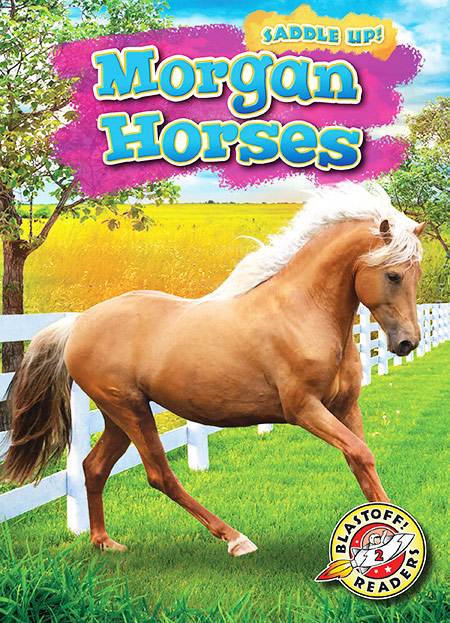 Buy Saddle Up: Morgan Horses from Daintree Books