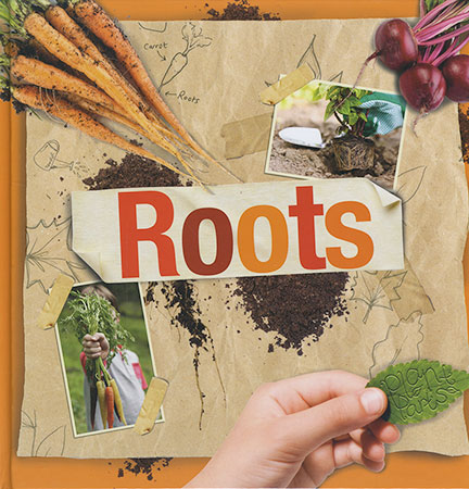 Buy Plant Parts: Roots from raintreeaust