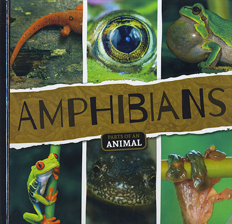 Buy Parts of An Animal: Amphibians from BooksDirect