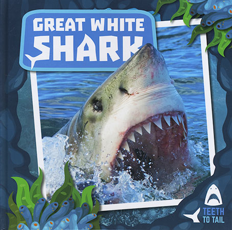 Buy Teeth To Tail: Great White Shark from raintreeaust