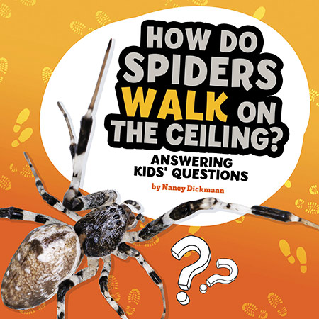 Buy Questions and Answers About Animals: How Do Spiders Walk On The Ceiling from Daintree Books