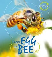 Buy Lifecycles: Egg to Bee from BooksDirect