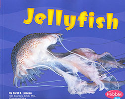 Under the Sea: Jellyfish