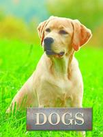 Buy Pet Library: Dogs from BooksDirect