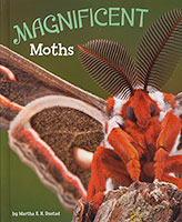 Marrvellous Minibeasts: Magnificent Moths