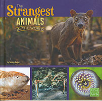 All About Animals: Strangest Animals