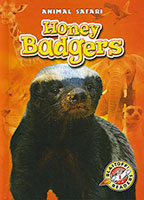 Animal Safari: Honey Badgers