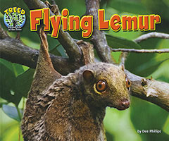 Treed: Flying Lemur