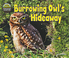 The Hole Truth - Underground Animal Life: Burrowing Owl's Hideaway
