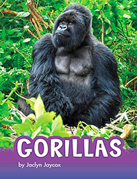 Animals: Gorillas